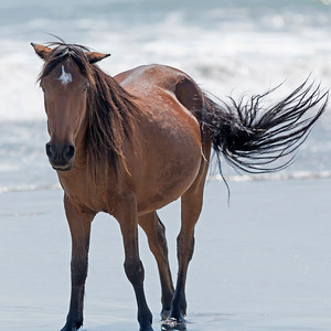 Wind Beneath my Tail