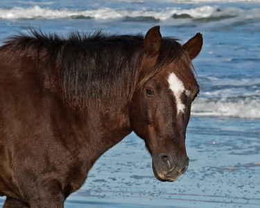 WIld Horse Close Up