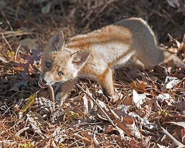 Chew on a Stick