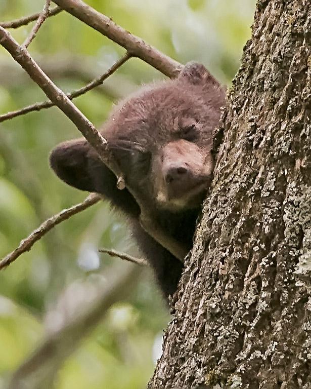 Tree Nap