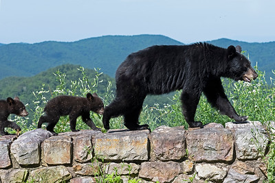 Bears On The Wall