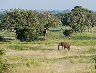 Elephants View