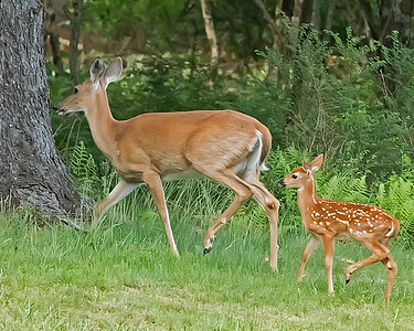 Following Mom