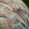 """<span id=""""title"""">Shell Detail</span> When you have a 300mm lens and a subject that's just a short distance away, your only choice is to get some sort of detail photo. Also, his butt was facing me."""