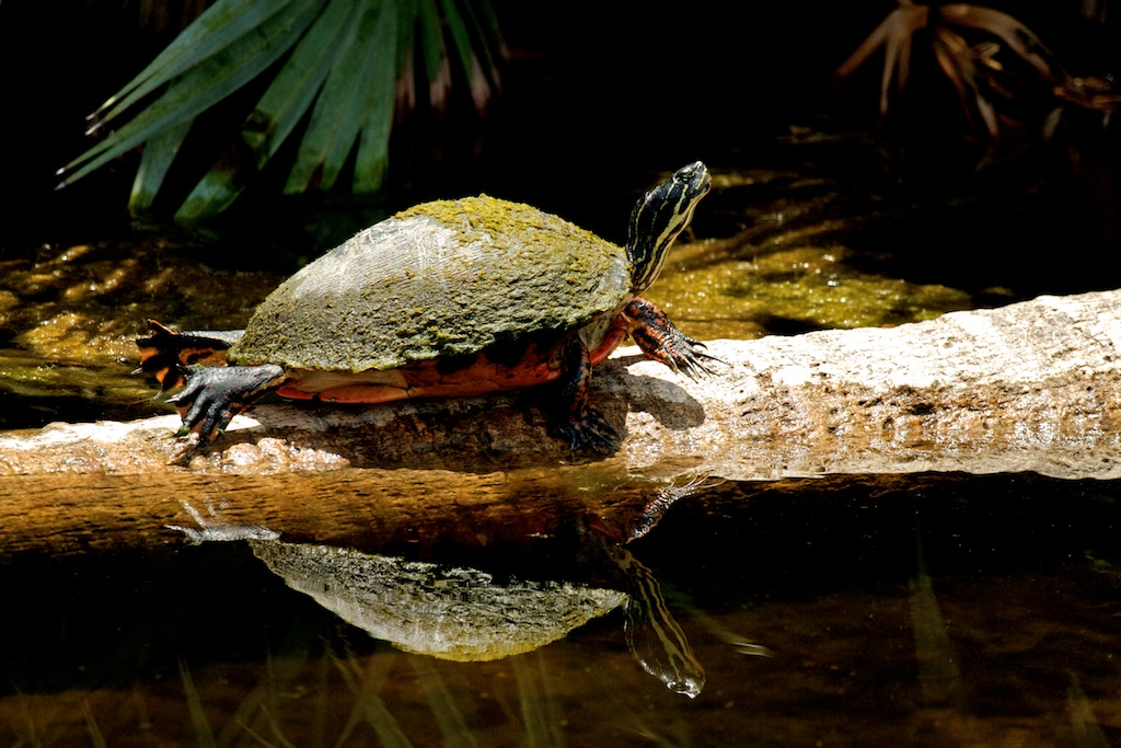 No Hurry-No Worry-Life in the slow lane  Green Cay Wetlands, Florida