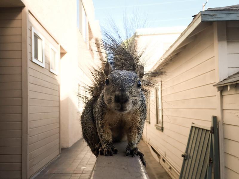 Squirrel Encounter