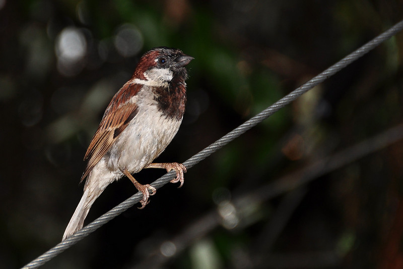 Bird on the wire!
