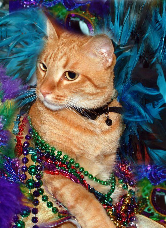 Cat Tuesday - Truman