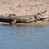 "<span id=""title"">Open Croc</span> <em>Kruger National Park</em> This croc is not angry, but is simply regulating his body temperature by letting the sun shine in its mouth, where it has a special organ for absorbing sunlight. Something like that... our guide was <em>really</em> well educated about all the animals - I wish I remembered everything he said."