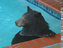 story bear ap