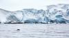 Jumping Gentoo, Cierva Cove, Antartica