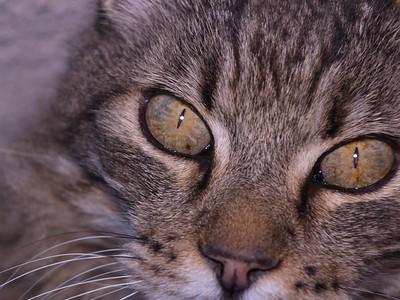 Willie Eyes