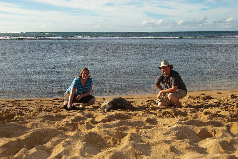 "<span id=""title"">Sea Turtle</span> <em>North Shore, Oahu</em> As you can see, you can get really close. All sea turtles are protected, so we probably shouldn't have gotten this close, but I think he was OK with us being there. It was so neat to see them on the beach."