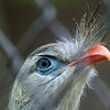 """<span id=""""title"""">Pretty Eyes</span> Very cool eyes and 'beak tuft' on this guy."""