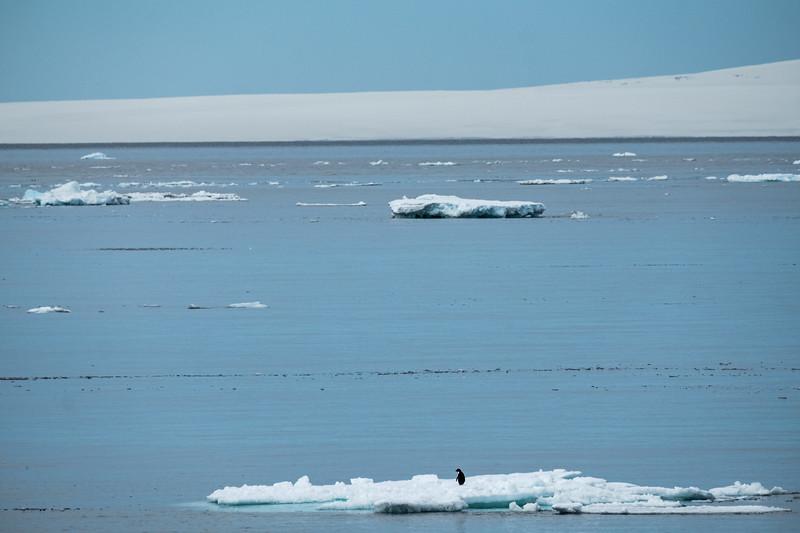 Lone Adelie Penguin on Ice Pack, Kinnes Cove, Antartica