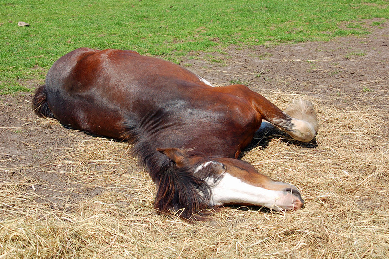 It was lying down playing with the hay, it's something I have never seen before! the horse seem to be enjoying itself!