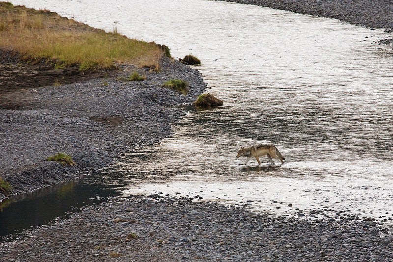 Wolf Crossing River, Yellowstone National Park