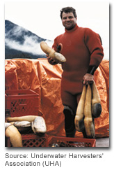 geoduck_pic1