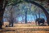 Sleeping  Elephant Forest, Zimbabwe