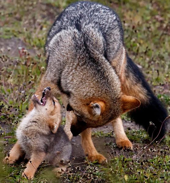 Fox Joy, Patagonia