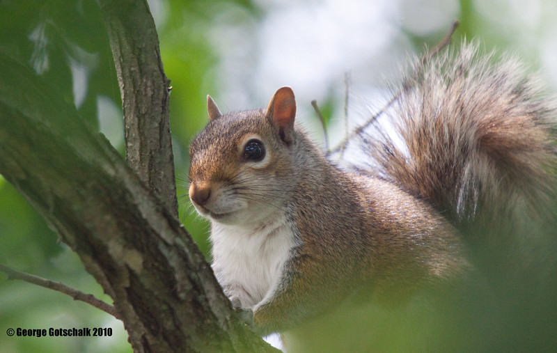 Henricus Park squirrel posing