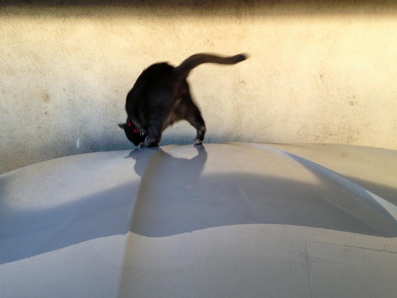 Hood Cat Escapes