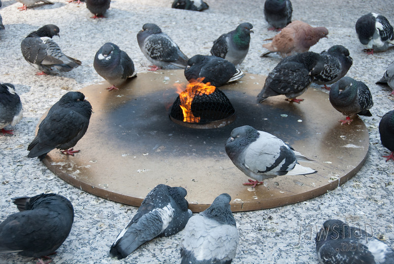 """<span id=""""title"""">Cold Pigeons</span> This eternal flame is in honor of lives lost during WWI, WWII and the Korean and Vietnam wars. I'm sure the pigeons respect that."""