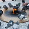 "<span id=""title"">Cold Pigeons</span> This eternal flame is in honor of lives lost during WWI, WWII and the Korean and Vietnam wars. I'm sure the pigeons respect that."