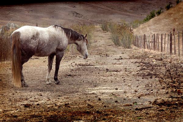 Horse_2594 copy