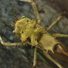 "<span id=""title"">Katydid</span> <em>Audubon Insectarium</em> Some sort of crazy spiked katydid at the insectarium, a museum for insects in the old US Customs building."