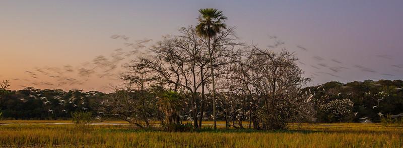 Dawn Departure, Pantanal, Brazil
