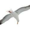 """<span id=""""title"""">Seagull</span>"""