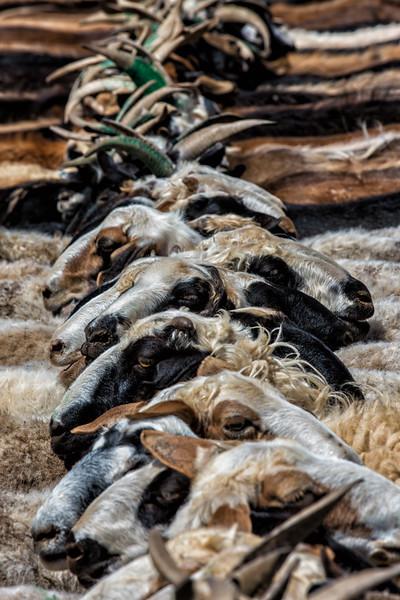 Goats, Mongolia