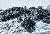 Adelie Penguins Facing Rough Seas, Kinnes Cove, Antartica