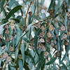 "<span id=""title"">Butterflies</span> The butterflies hang out high up in a eucalyptus grove. They don't appear very vibrant because their wings are all closed, so we only saw the dull underside."