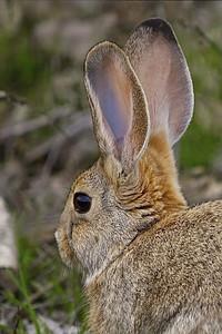 Dem's Some Ears!!