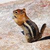 "<span id=""title"">Ground Squirrel </span>"