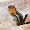 "<span id=""title"">Ground Squirrel </span>"