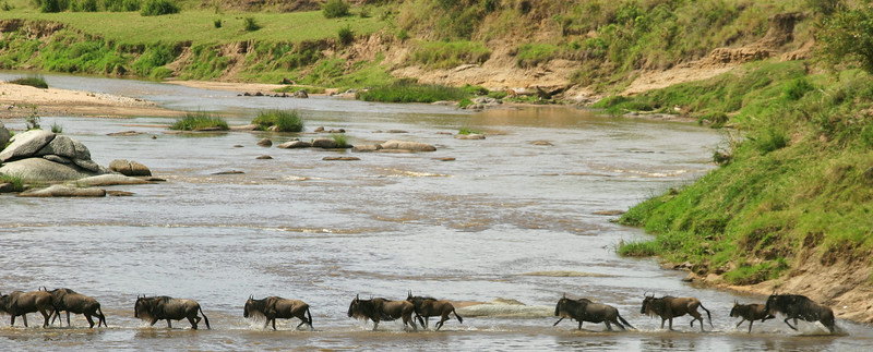 Crossing the Mara, Tanzania