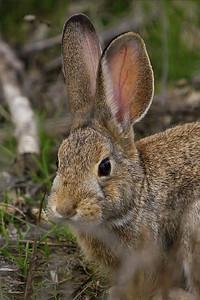 Bunny face for dar :-)