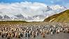 King Penguin Colony, Salisbury Plain, South Georgia