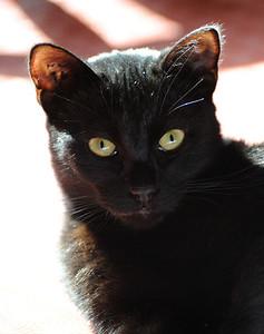 Lola, 2011