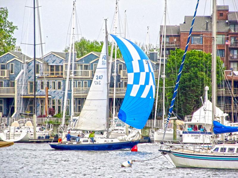 Wednesday Night Sailboat races Copyright Sue Steinbrook