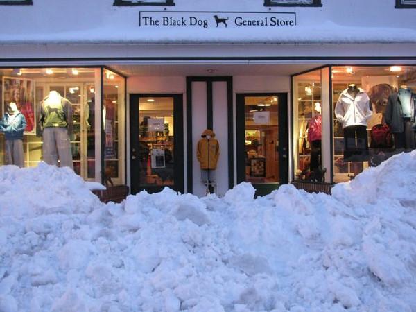 Black Dog, Blizzard 2010 Copyright Sue Steinbrook