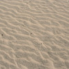 A close up of the sand at Ano Nuevo.