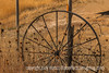 Old Wheel Rim and Autumn Grasses and Seedheads