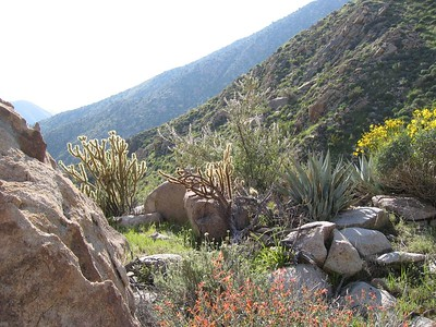 Anza Borrego - February 2005