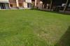 pelouse en ete<br /> lawn in the summer