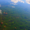 McGovern pond, spice bush