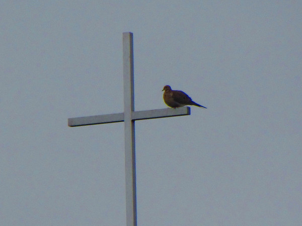 Dove on a cross.<br /> <br /> Photographer's Name: Brian Fox<br /> Photographer's City and State: Anderson, Ind.